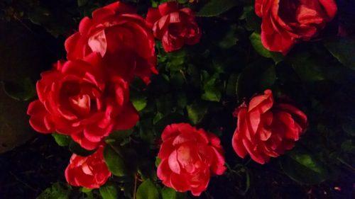 ricky-hanson-rosesatnight-rickyhanson